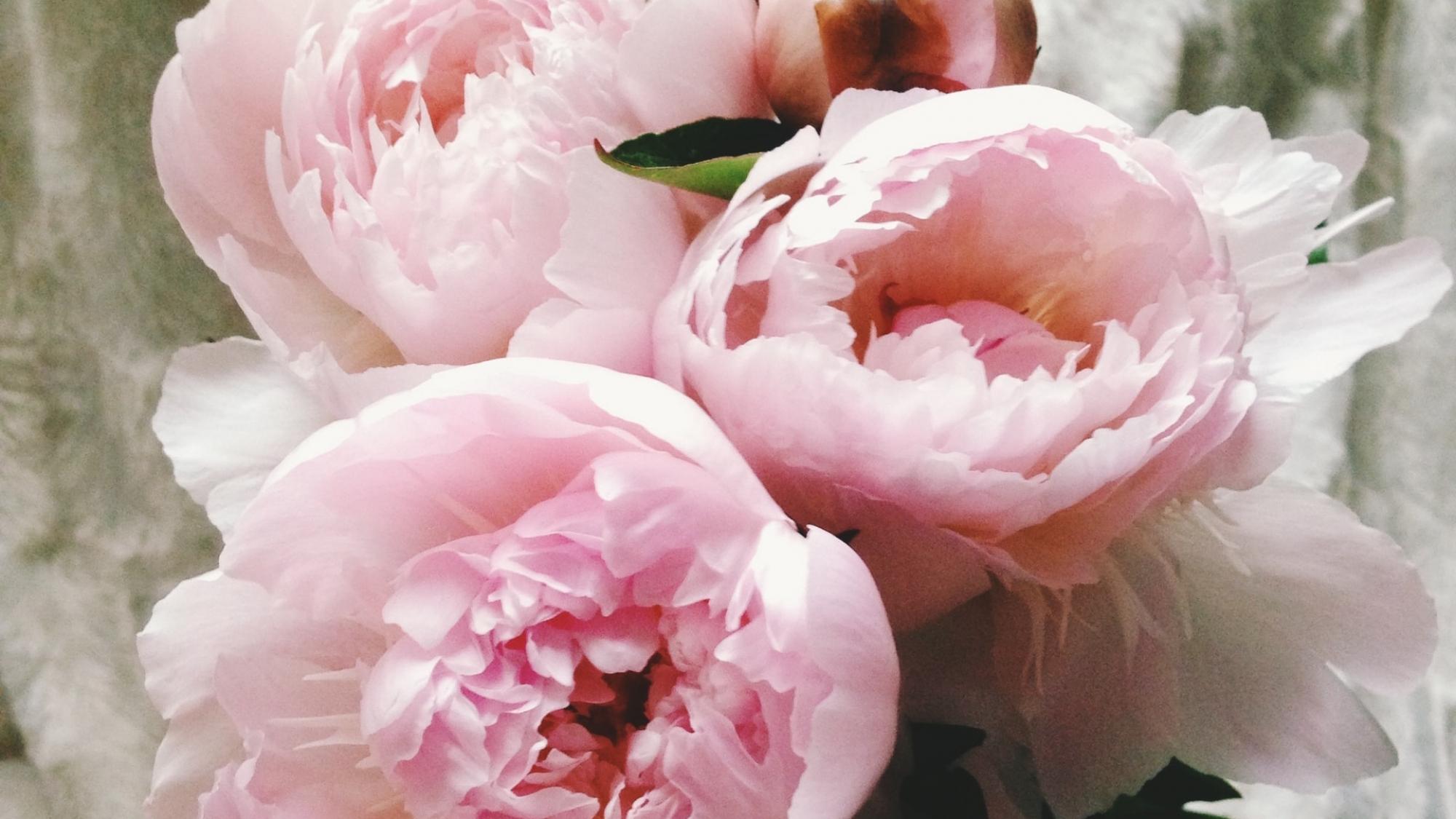 Bloemen afbeelding